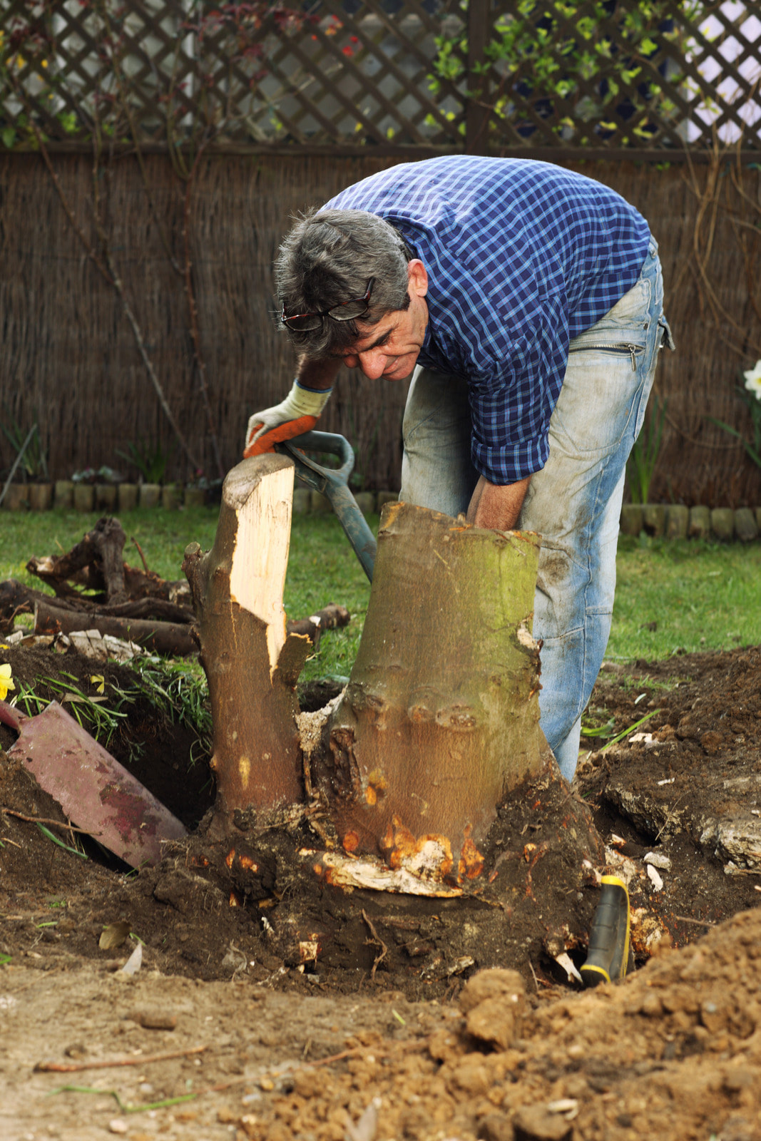 Man bent over a tree stump, trying to remove it on his own with a shovel.